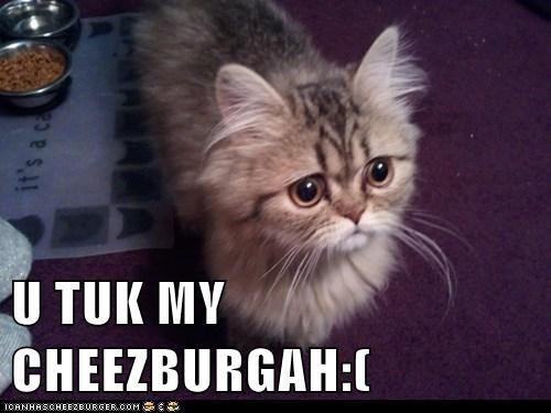 Cheezburger Image 5623146240