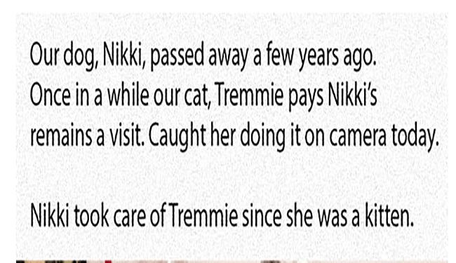 Sad dogs memory passed away enemies Cats - 5623813
