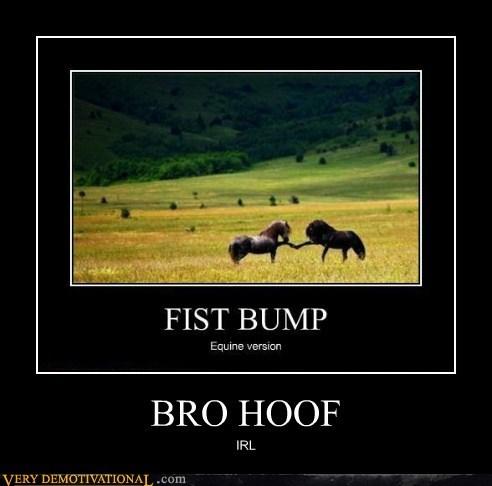 bro Bronies hilarious hoof wtf - 5623966208