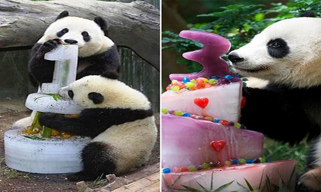 cute panda cute cakes panda birthday funny panda cute cakes funny cakes funny - 5624069