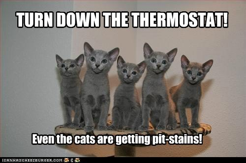 TURN DOWN THE THERMOSTAT! Even the cats are getting pit-stains!