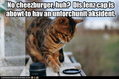 Cheezburger Image 5624272128