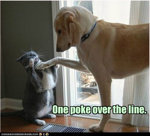 angry annoying caption captioned Cats dogs fighting goggies Interspecies Love poke poking unhappy