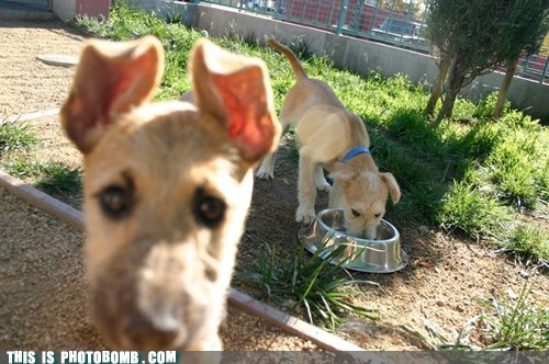 Animal Bomb animals dogs food puppy - 5625439744