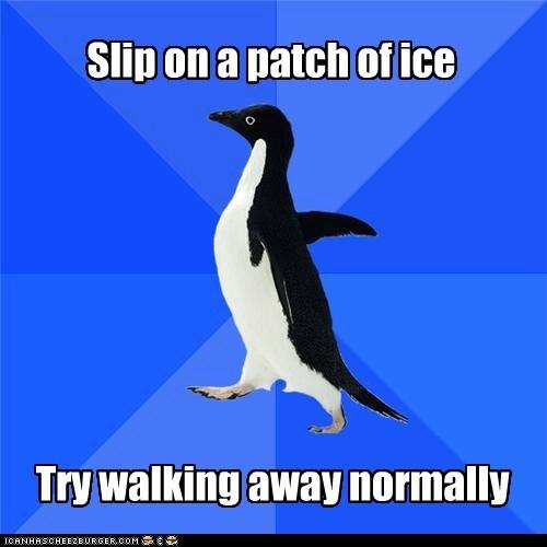 birds ice normal penguins slip socially awkward penguin walk walking winter