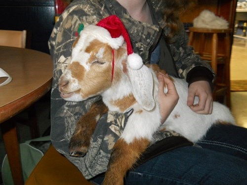 baby calf christmas goat hat kid reader squees