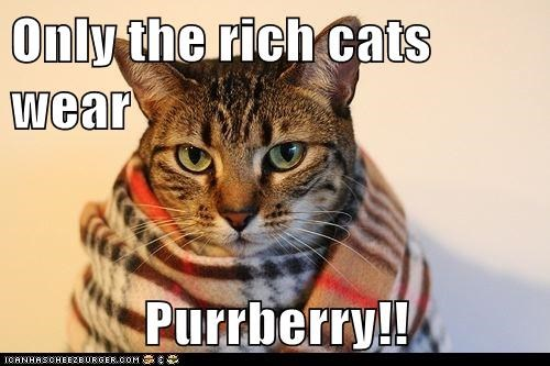 brand,burberry,caption,captioned,cat,only,pun,purr,rich,wear