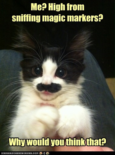 caption,captioned,cat,confused,denial,drug,drugs,feigning,high,ignorance,kitten,marking,me,mustache,question,sniffing,why