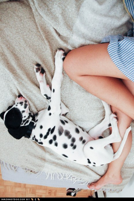 asleep,cyoot puppeh of teh day,dalmatian,puppy,sleeping