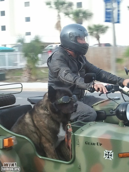 BAMF dogs driving Like a Boss motorcycle - 5626407168