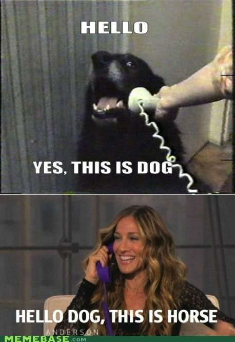 dogs,horse,Memes,phone,sarah jessica parker