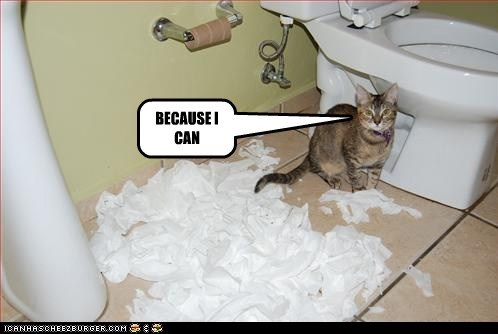 bathroom because can caption captioned cat explanation I mess reason toilet paper why - 5626563584