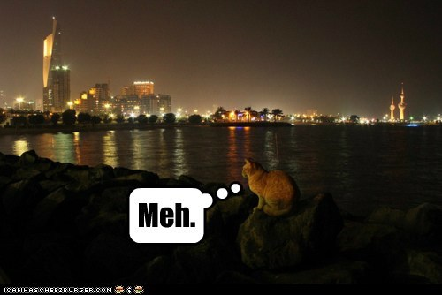 caption captioned cat meh skyline sunset unimpressed view - 5627177472