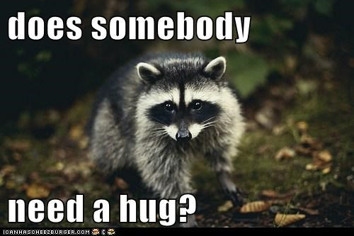 animals,friendly,hug,raccoon