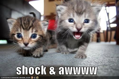 cute kitten lolcats lolkittehs war - 562844416