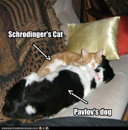 Schrodinger's Cat Pavlov's dog -------> <-------