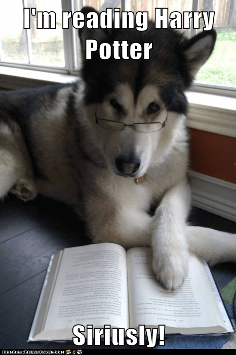books Condescending Literary Pun Dog dogs Harry Potter puns reading seriously Sirius sirius black
