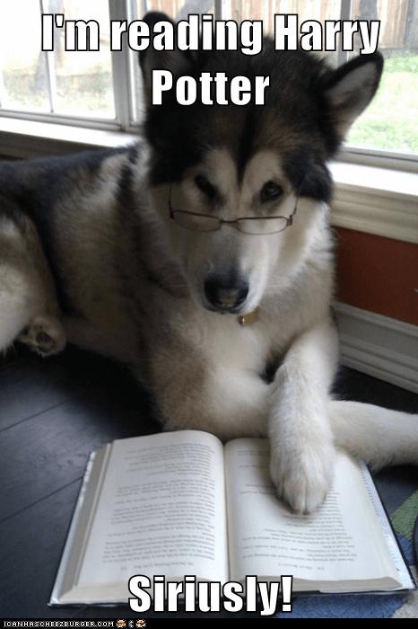 books Condescending Literary Pun Dog dogs Harry Potter puns reading seriously Sirius sirius black - 5628929792