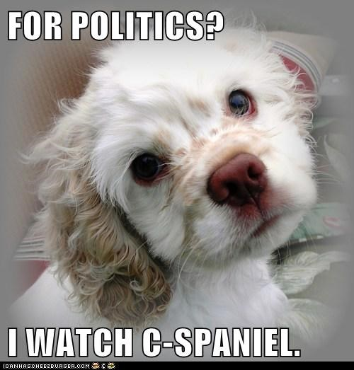 best of the week cocker spaniel c-span c-spaniel cute face Hall of Fame political politics - 5629669632