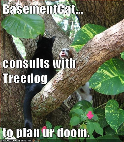 basement cat,consultation,conversation,demise,doom,evil plan,friends,Impending Doom,outside,plotting your demise,spaniel,talk,talking,treedog,trees