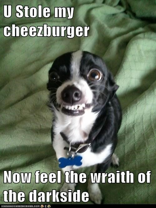 Cheezburger Image 5630353664