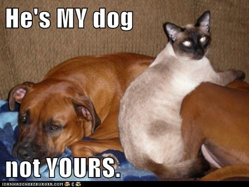 cat dogs friends mine my dog not yours whatbreed - 5630540032