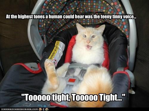 """At the highest tones a human could hear was the teeny tinny voice... """"Tooooo tight, Tooooo Tight..."""""""