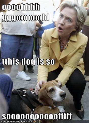 beagle dogs Hillary Clinton omg OMG face political politics Pundit Kitchen so soft soft this is amazing whoa - 5632744960
