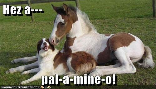 awesome friends horse interspecies friendship love matching pun whatbreed