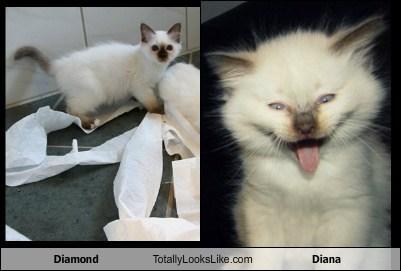 Diamond Totally Looks Like Diana
