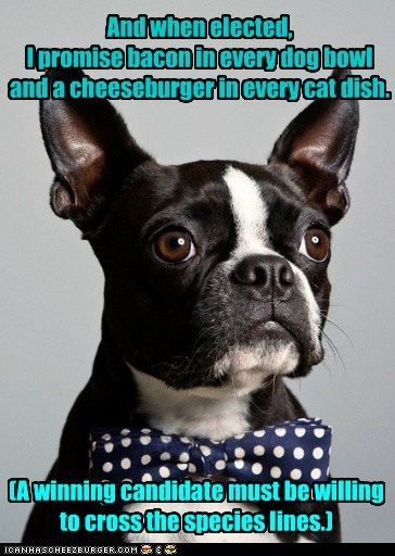 awesome boston terrier bowtie cheesburger elected hotdog political politics president - 5636221184