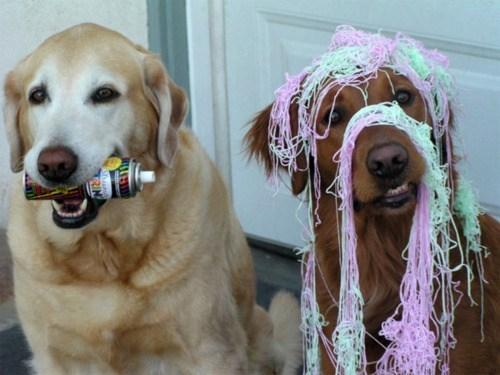doggeh Sundog - 5636522240