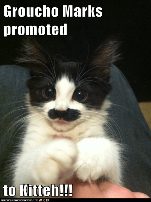 Groucho Marks promoted  to Kitteh!!!