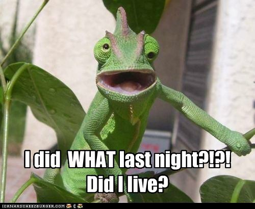 animals,chameleon,drunk,hangover,hung over,last night,Party,reptiles,whoa