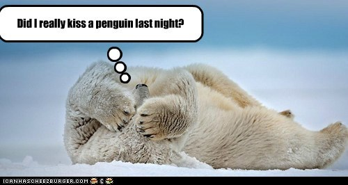 alcohol drunk hangover hungover KISS kissing penguin polar bear - 5637121024