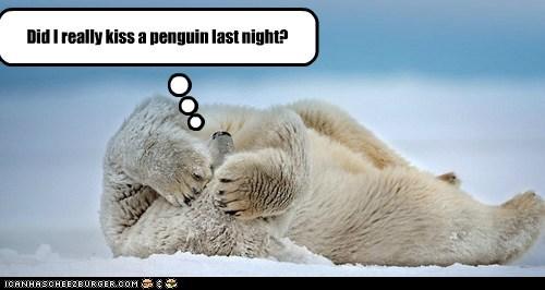 alcohol drunk hangover KISS kissing penguin polar bear - 5637121024