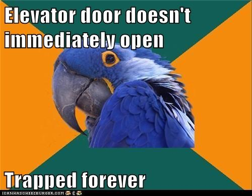 elevator,forever,Paranoid Parrot,parrot,trapped