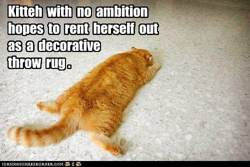 ambition caption captioned cat decorative hope imitation impression no rent rug tabby throw rug - 5638970368