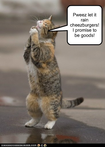 Pweez let it rain cheezburgers! I promise to be goods!