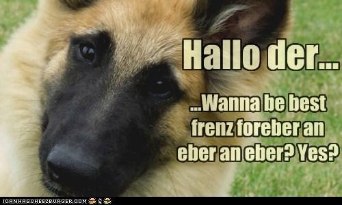 Cheezburger Image 5640104448