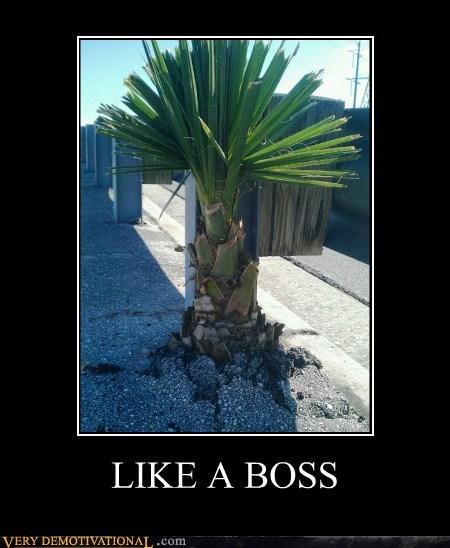concrete hilarious Like a Boss palm tree