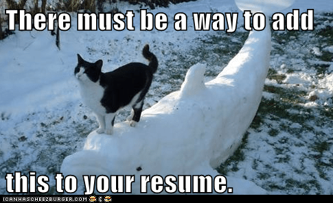 animals cat employment I Can Has Cheezburger resume snow snow art snow dolphin snow sculpture work - 5640253184