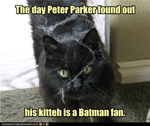 The day Peter Parker found out his kitteh is a Batman fan.