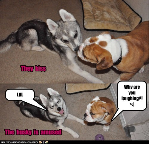 They kiss The husky is amused Why are you laughing?! >:| LOL