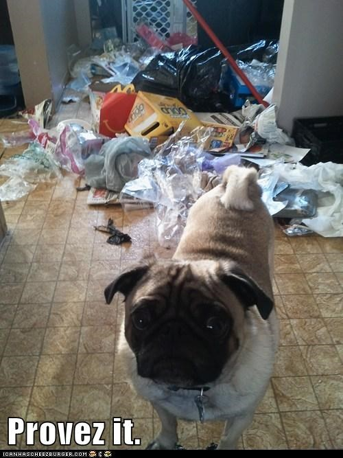 best of the week destruction garbage Hall of Fame mess oops prove it pug - 5640693248