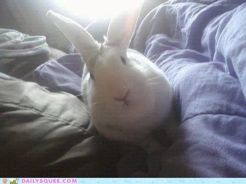bunny cartoons happy bunday morning rabbit reader squees saturday watching - 5640899840