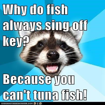 bad jokes fish jokes Lame Pun Coon off key puns raccoons singing tuna tuna fish - 5640957952
