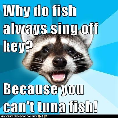 bad jokes fish jokes Lame Pun Coon off key puns raccoons singing tuna tuna fish - 5640957952