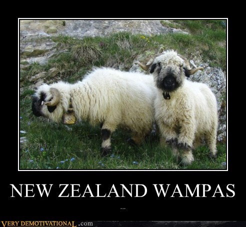 hilarious new zealand sheep wampas wtf - 5641197824
