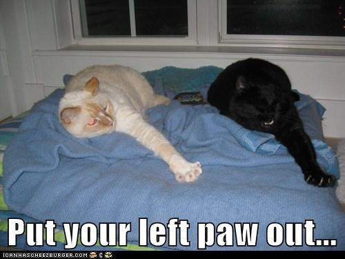 caption,captioned,cat,Cats,dance,hokey pokey,instructions,left,out,paw,put,song,stretch,stretching,synchronized